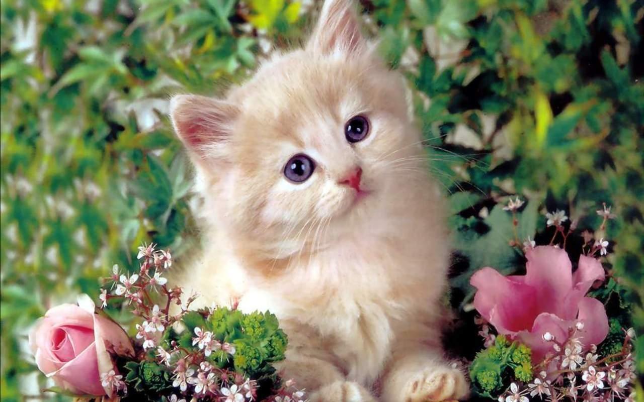 animals & birds cute kittens wallpapers (desktop, phone, tablet