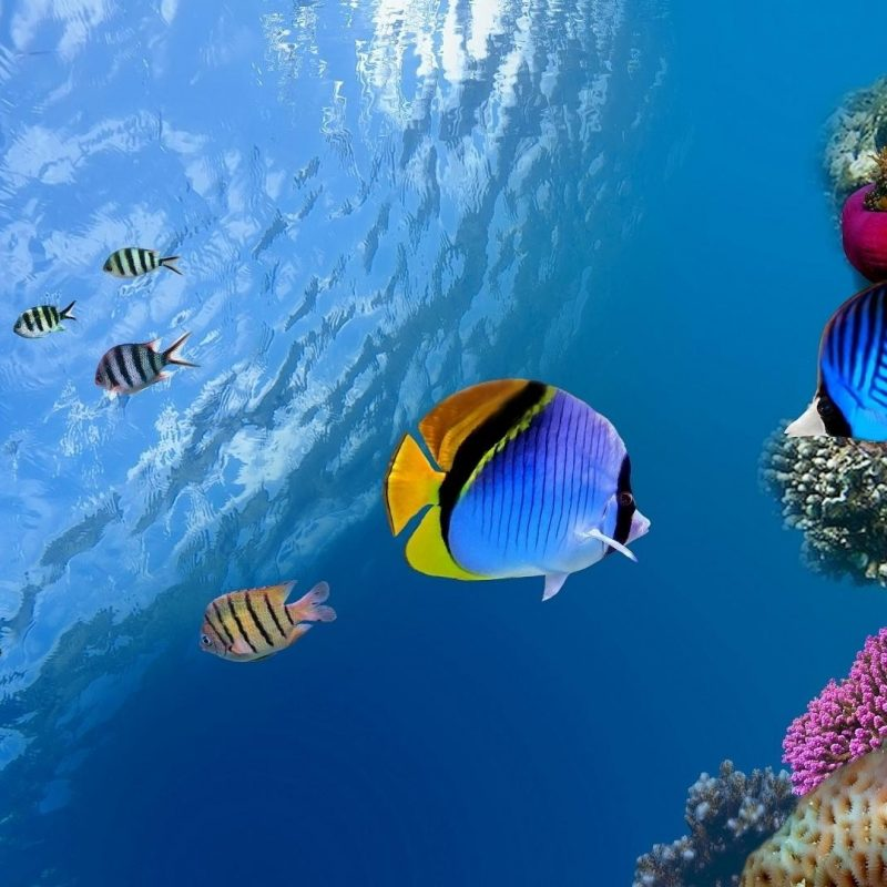 10 Top Tropical Fish Desktop Wallpaper FULL HD 1080p For PC Background 2020 free download animals birds tropical fish wallpapers desktop phone tablet 1 800x800