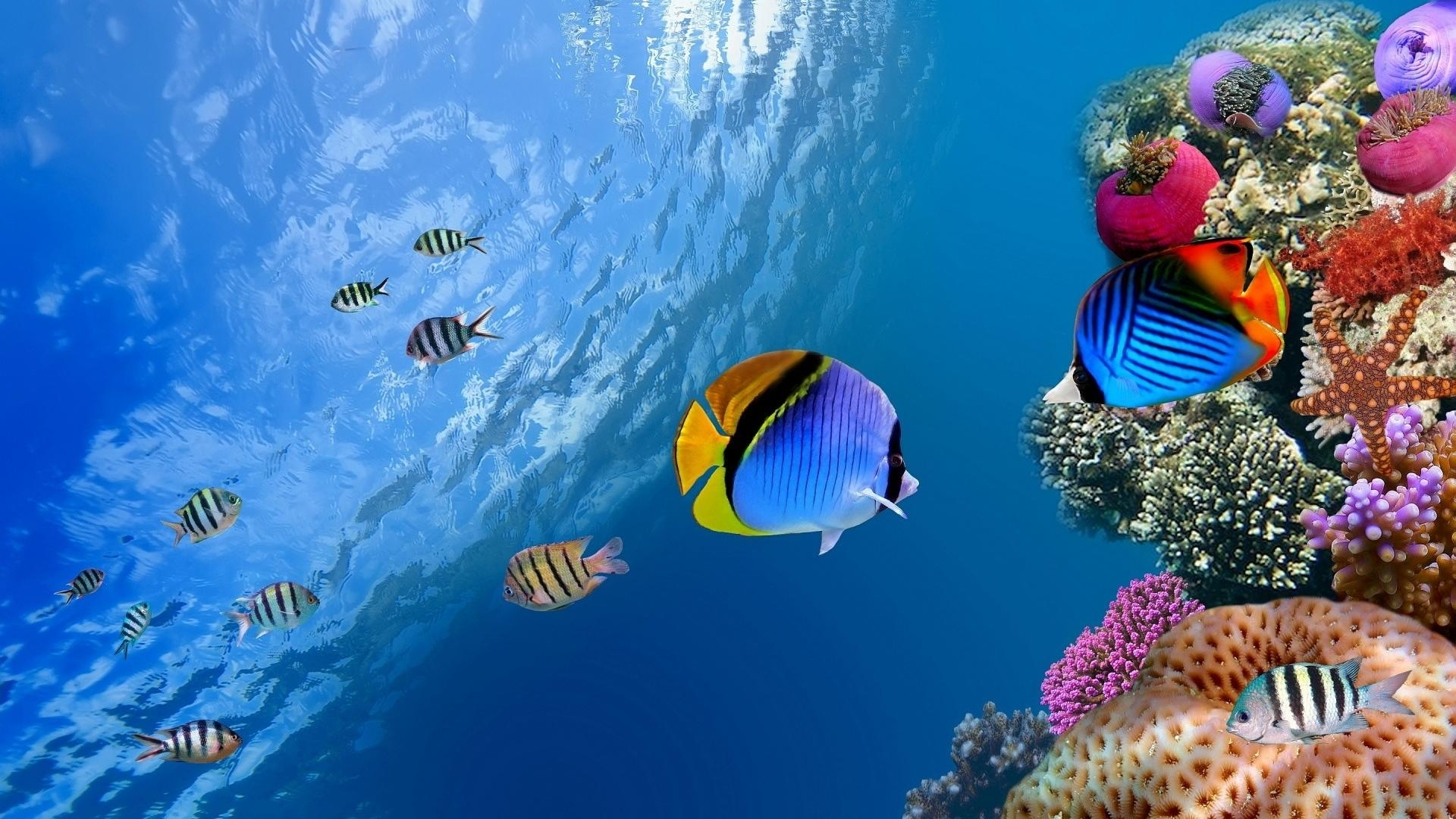 animals & birds tropical fish wallpapers (desktop, phone, tablet