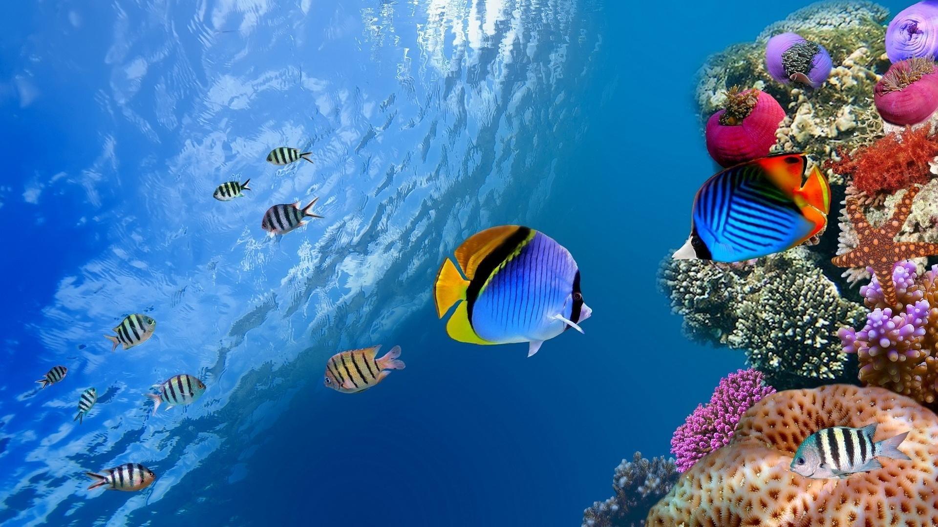 animals & birds tropical fish wallpapers (desktop, phone, tablet