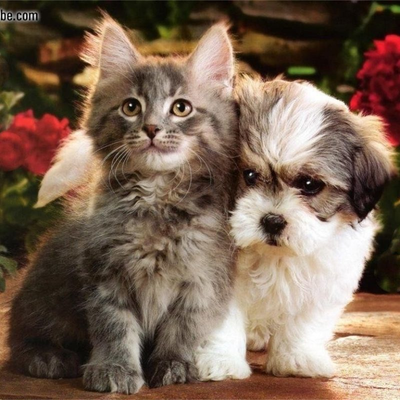 10 Top Kittens And Puppies Pics FULL HD 1920×1080 For PC Desktop 2021 free download animals kittens puppies picture nr 9787 800x800