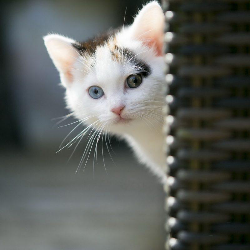 10 Best Hd Cute Cat Wallpapers FULL HD 1080p For PC Desktop 2018 free download animals wallpaper cute cat wallpapers images for hd wallpaper 1 800x800