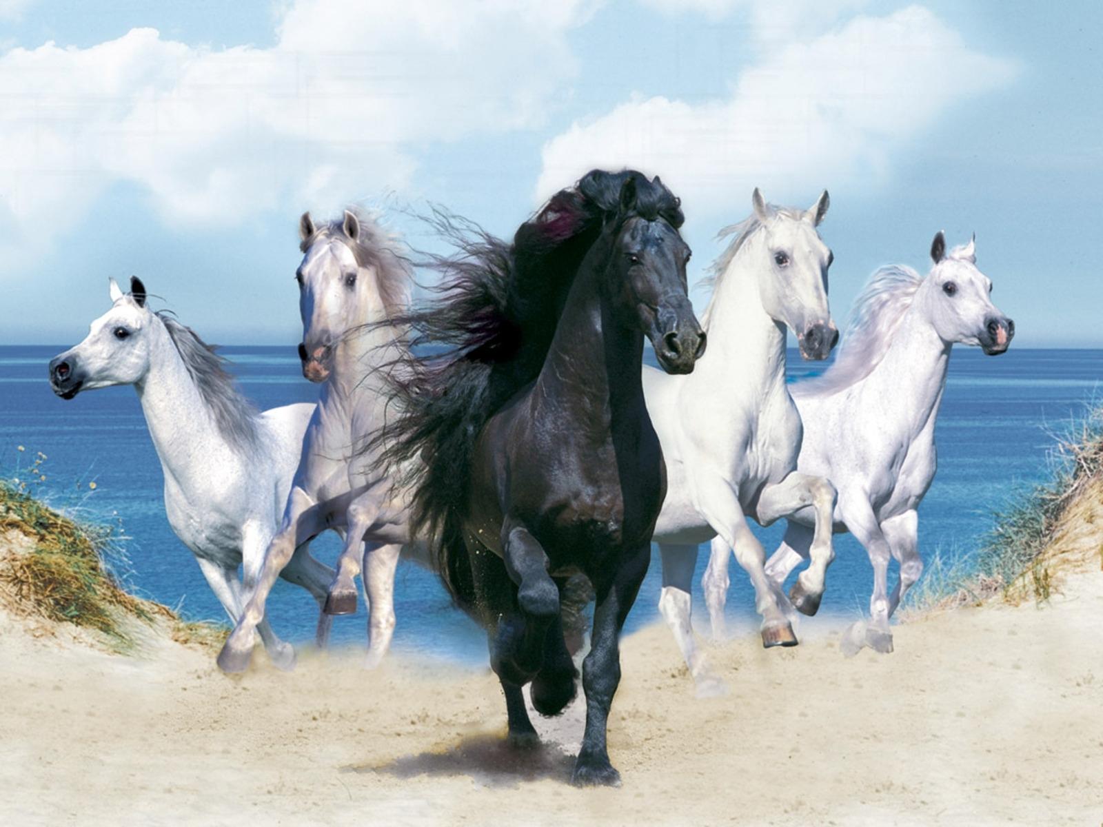 animals wallpapers fantasy beautiful horses   horse, horse wallpaper