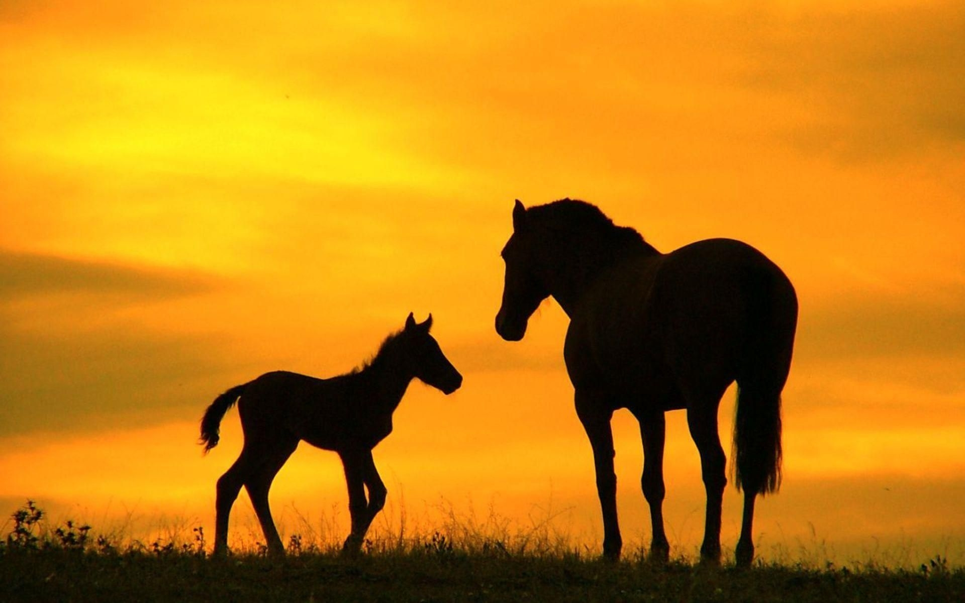 animals zoo park: horses wallpapers for desktop | horse wallpaper