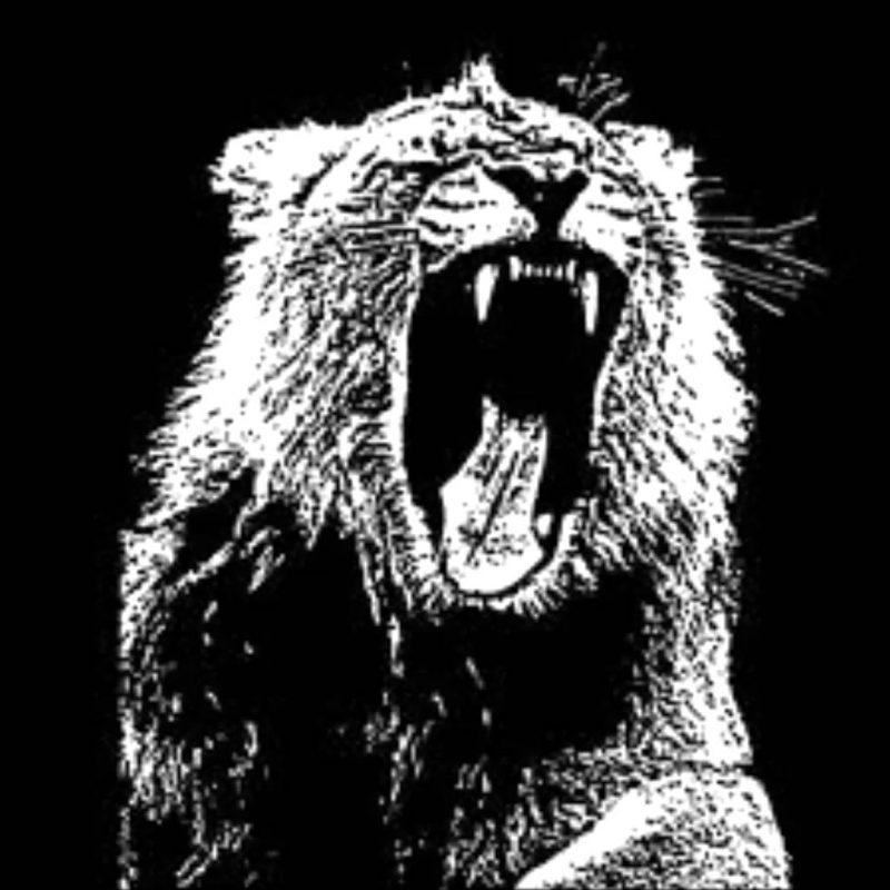 10 Best Martin Garrix Animals Logo FULL HD 1920×1080 For PC Background 2018 free download animalsmartin garrix clean youtube 800x800
