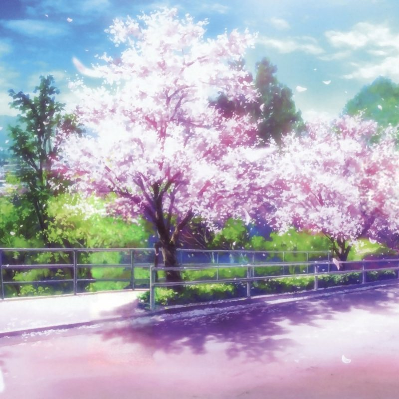 10 Most Popular Cherry Blossom Wallpaper Anime FULL HD 1920×1080 For PC Desktop 2018 free download anime cherry blossom desktop wallpaper pixelstalk 800x800