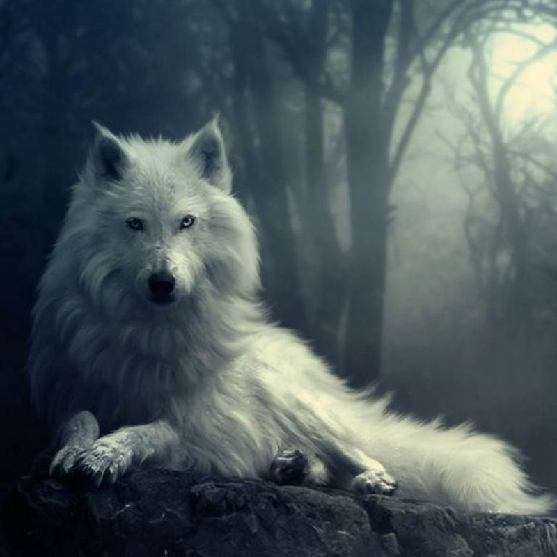 10 New Wolf Pictures For Wallpaper FULL HD 1920×1080 For PC Desktop 2020 free download anime wolf wallpapers wallpaper 1024x768 animated wolf wallpapers 800x800