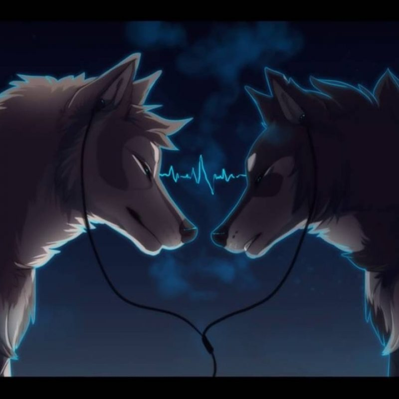 10 Most Popular Pics Of Anime Wolves FULL HD 1920×1080 For PC Background 2020 free download anime wolves stereo heart youtube 800x800