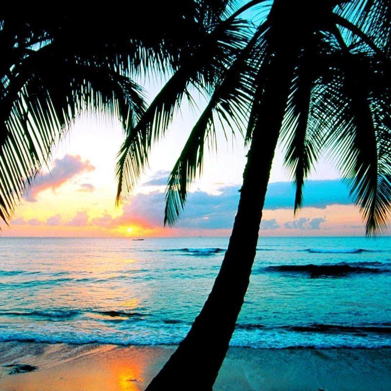 10 Best Palm Trees Desktop Wallpaper FULL HD 1080p For PC Desktop 2018 free download apple vintage background hd desktop wallpaper high definition hd 800x800