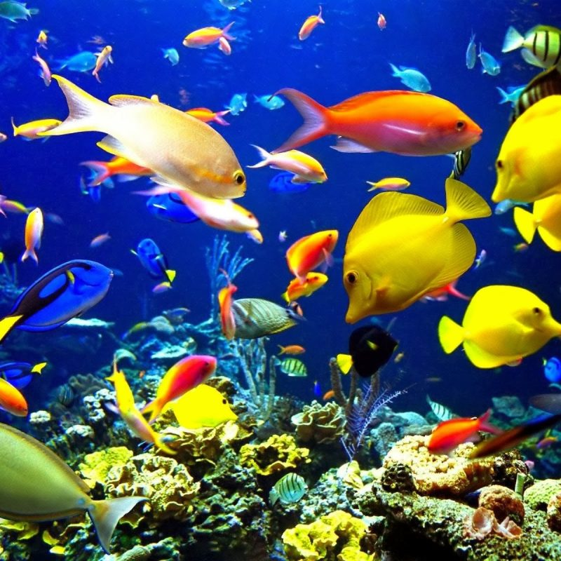 10 Most Popular Fish Backgrounds For Desktop FULL HD 1920×1080 For PC Background 2018 free download aquarium wallpaper free beautiful desktop wallpapers 2014 800x800