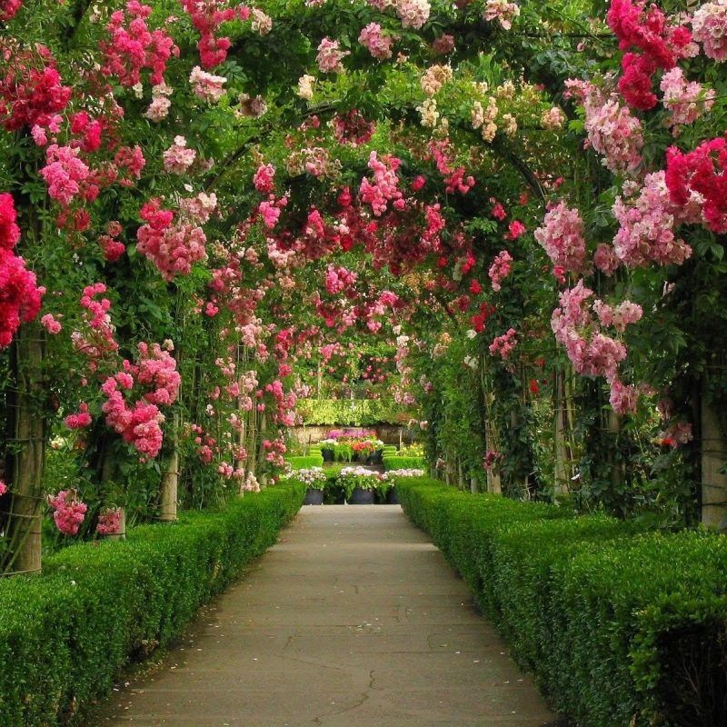 10 Top Garden Pictures For Background FULL HD 1080p For PC Desktop 2018 free download arches in rose garden wallpaper and background image 1600x1200 800x800