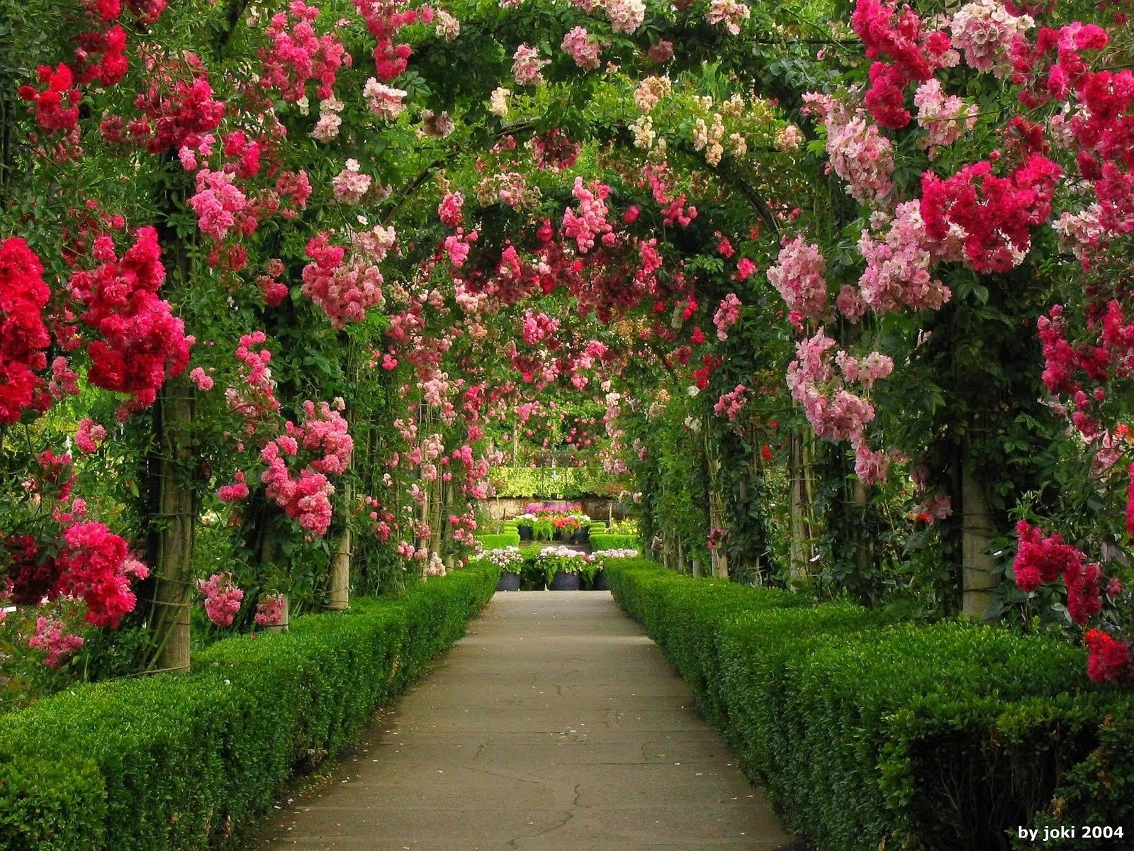 arches in rose garden wallpaper and background image | 1600x1200