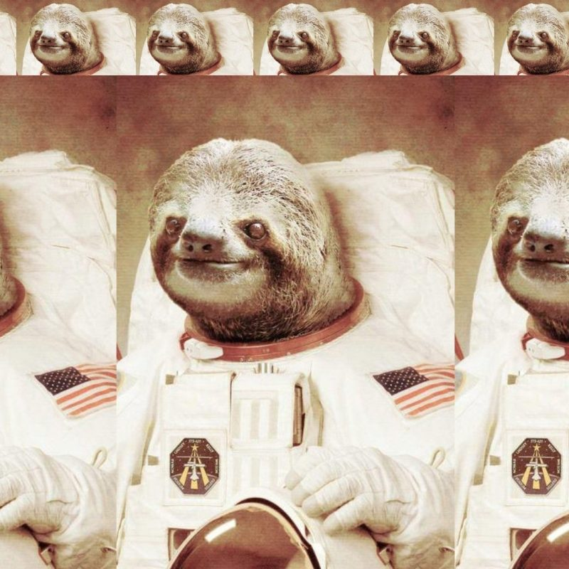 10 Latest Sloth Astronaut Wallpaper FULL HD 1080p For PC Background 2020 free download astronaut sloth walldevil 800x800