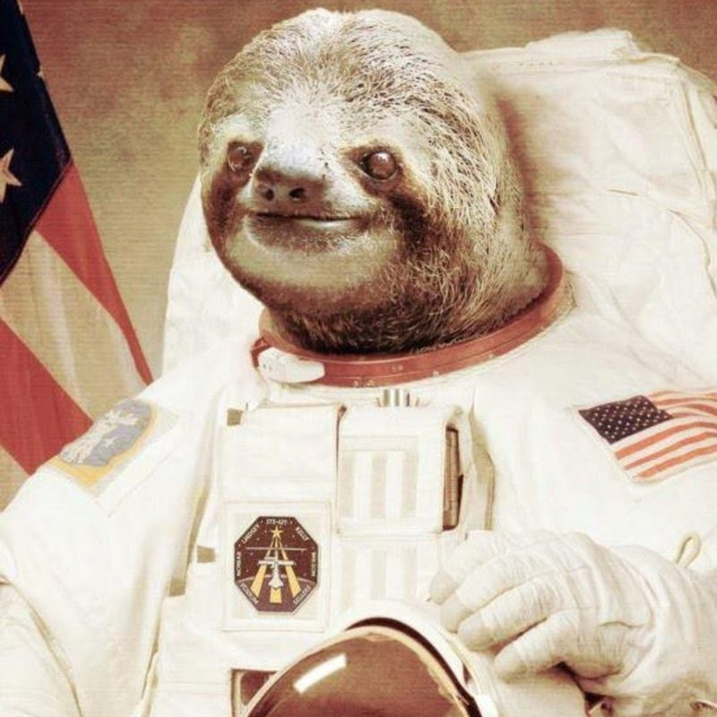 10 Latest Sloth Astronaut Wallpaper FULL HD 1080p For PC Background 2020 free download astronaut sloth youtube 800x800