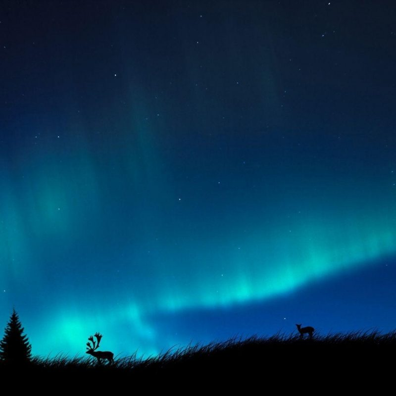 10 New Real Aurora Borealis Wallpaper FULL HD 1080p For PC Desktop 2018 free download aurora borealis wallpapers hd wallpaper cave 3 800x800