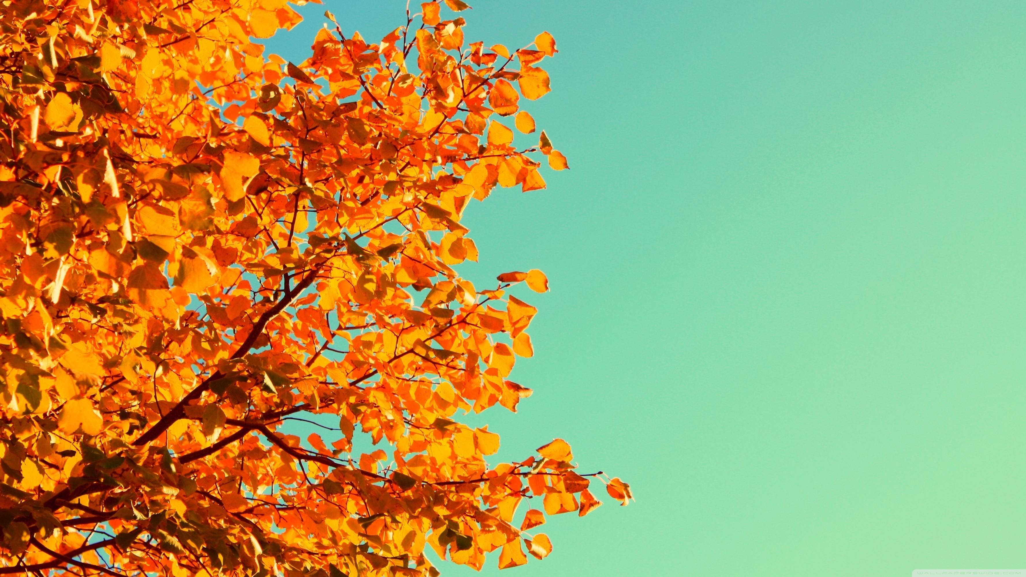 autumn colors ❤ 4k hd desktop wallpaper for 4k ultra hd tv • wide