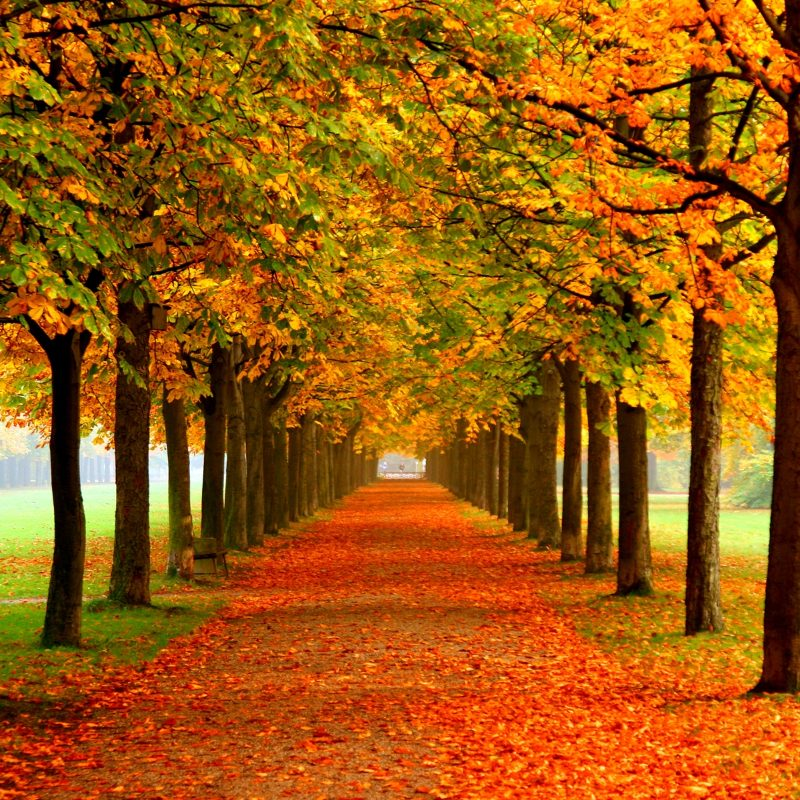10 Most Popular Free Desktop Wallpaper For Fall FULL HD 1080p For PC Desktop 2018 free download autumn colors wallpaper group with 54 items 800x800