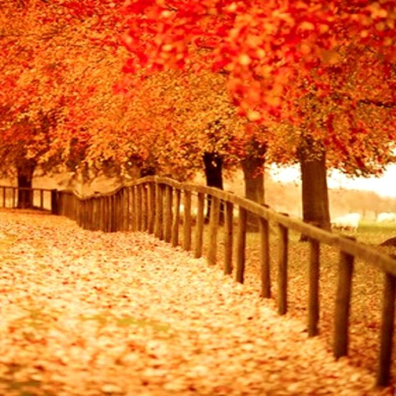 10 Latest Pretty Fall Backgrounds Desktops FULL HD 1920×1080 For PC Background 2020 free download autumn desktop backgrounds free group with 62 items 800x800