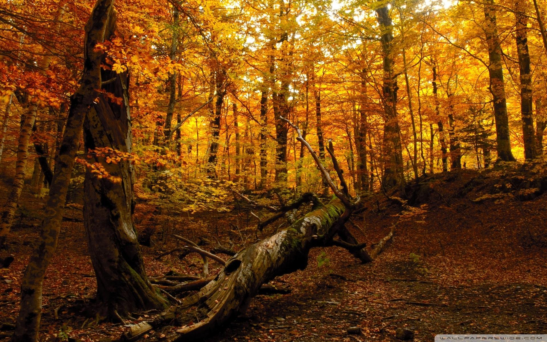 autumn forest ❤ 4k hd desktop wallpaper for 4k ultra hd tv • tablet