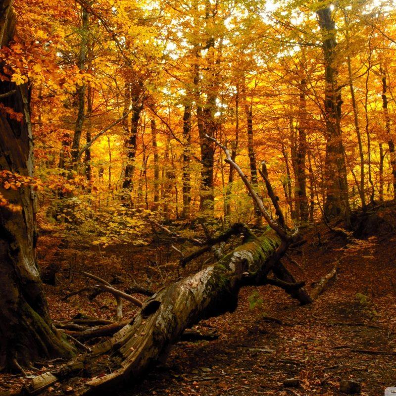 10 Best Autumn Forest Wallpaper Hd FULL HD 1920×1080 For PC Desktop 2021 free download autumn forest e29da4 4k hd desktop wallpaper for 4k ultra hd tv e280a2 tablet 800x800
