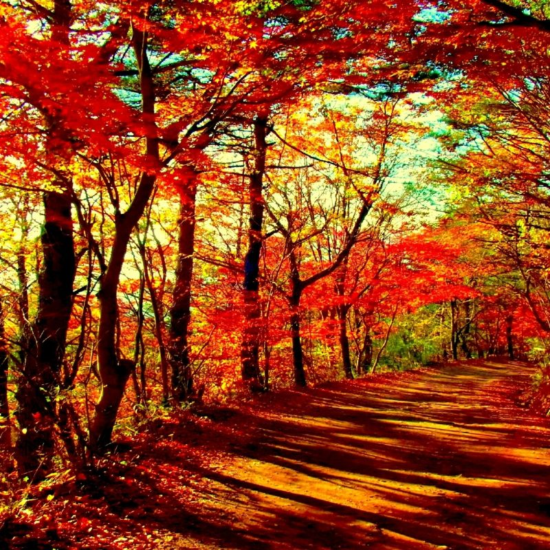 10 Best Autumn Forest Wallpaper Hd FULL HD 1920×1080 For PC Desktop 2021 free download autumn forest e29da4 4k hd desktop wallpaper for e280a2 dual monitor desktops 800x800