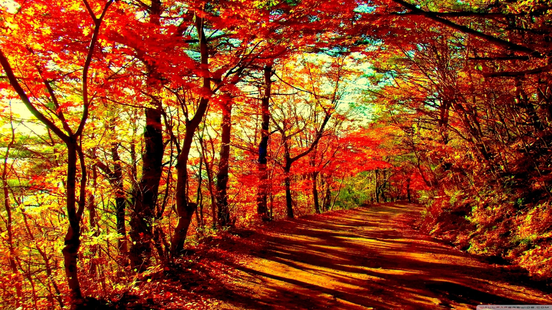 autumn forest ❤ 4k hd desktop wallpaper for • dual monitor desktops