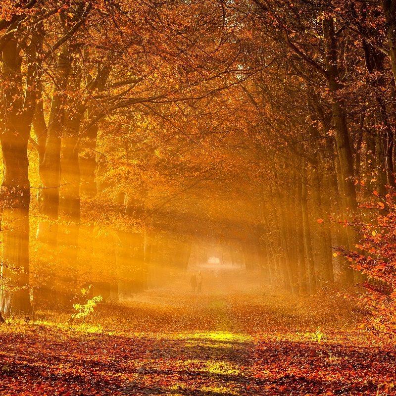 10 Top Autumn Forest Wallpaper Widescreen FULL HD 1080p For PC Desktop 2021 free download autumn forest hd 922 seasons hd desktop wallpaper 800x800