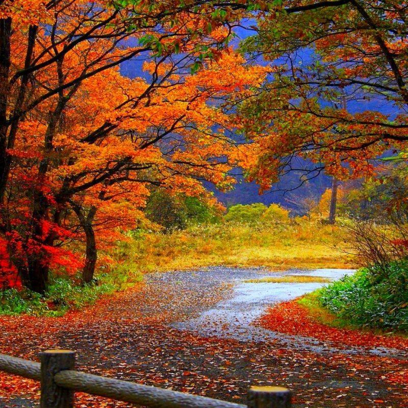 10 New Desktop Wallpaper Fall Scenes FULL HD 1080p For PC Desktop 2021 free download autumn forest hd wallpaper hd latest wallpapers 800x800