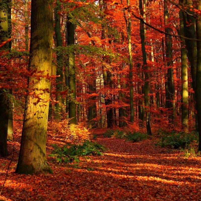 10 Top Autumn Forest Wallpaper Widescreen FULL HD 1080p For PC Desktop 2021 free download autumn forest wallpaper widescreen media file pixelstalk 800x800