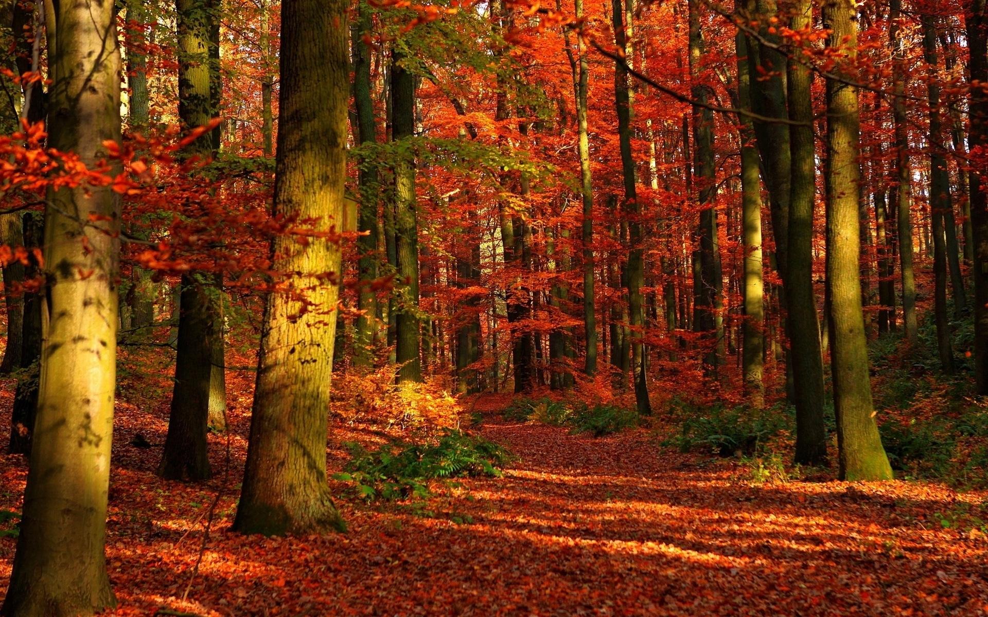 autumn forest wallpaper widescreen. - media file | pixelstalk