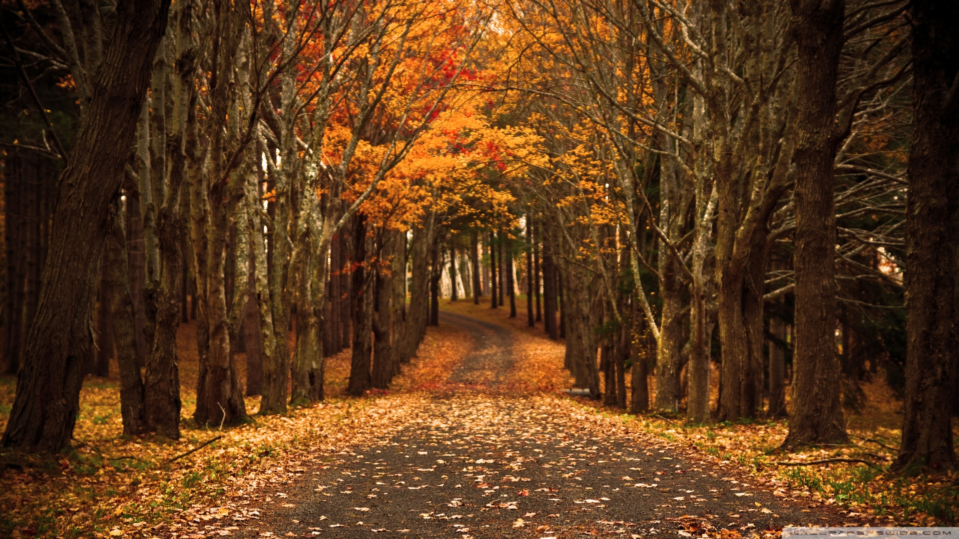autumn hd wallpapers 1080p - wallpapersafari