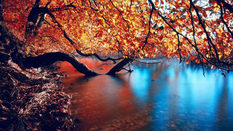 10 Top Autumn Hd Wallpaper 1080P FULL HD 1080p For PC Desktop 2018 free download autumn hd wallpapers wallpaper cave 1 800x450
