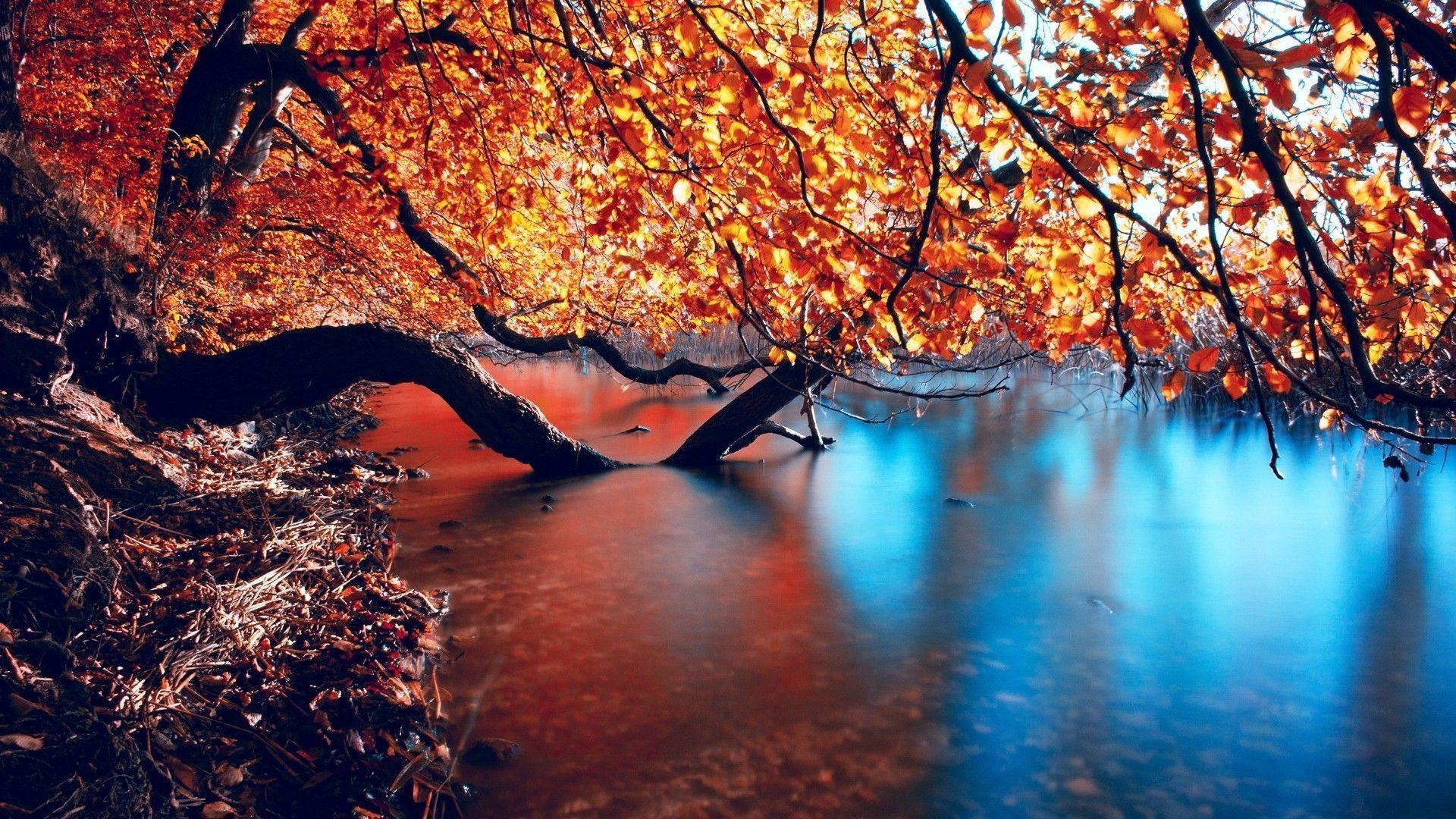 autumn hd wallpapers - wallpaper cave
