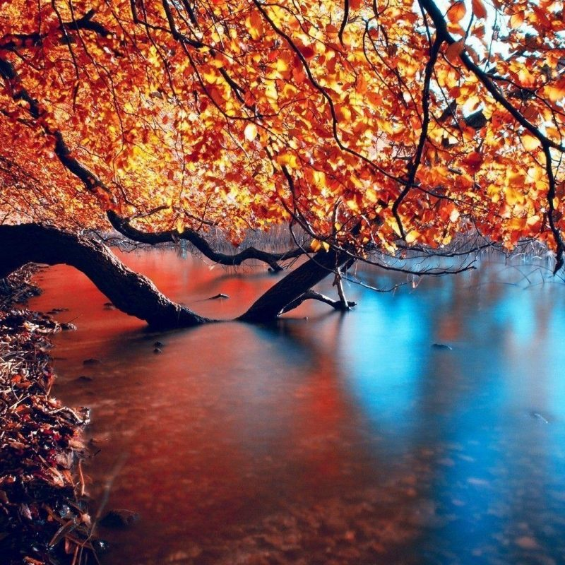 10 Best Hd Autumn Wallpapers 1080P FULL HD 1920×1080 For PC Desktop 2021 free download autumn hd wallpapers wallpaper cave 800x800