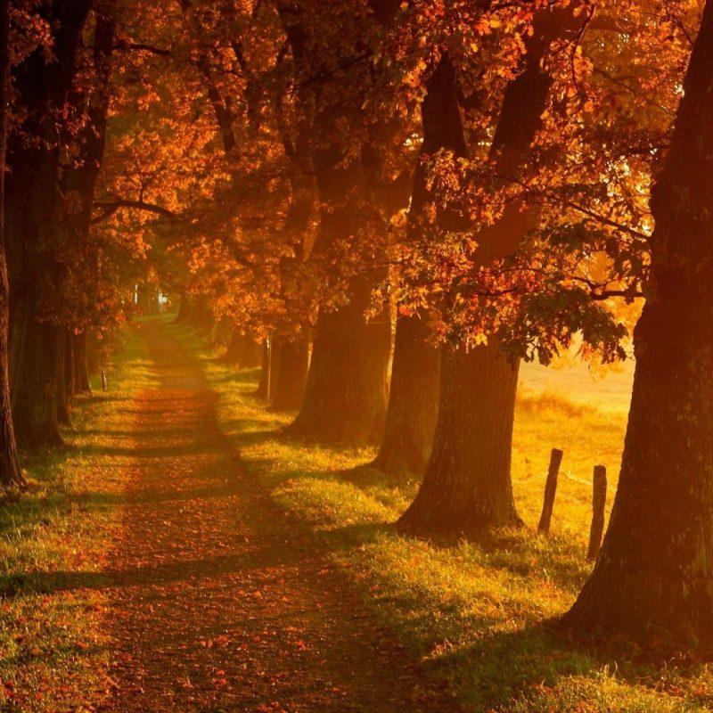 10 Most Popular Autumn Wallpaper Hd 1920X1080 FULL HD 1080p For PC Desktop 2020 free download autumn landscape autumn landscape scenery wallpaper in 1920x1080 800x800