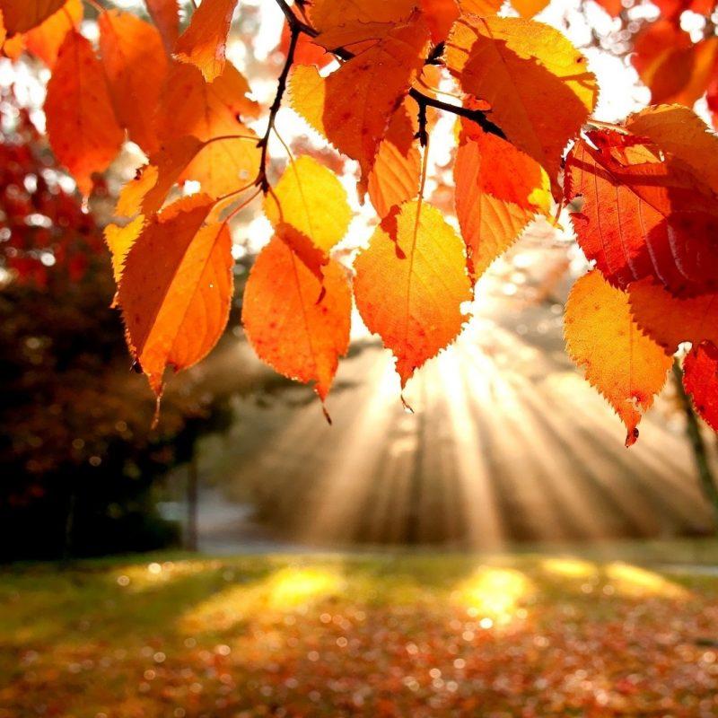 10 Latest Autumn Landscape Wallpaper Hd FULL HD 1920×1080 For PC Desktop 2018 free download autumn landscape e29da4 4k hd desktop wallpaper for 4k ultra hd tv 800x800