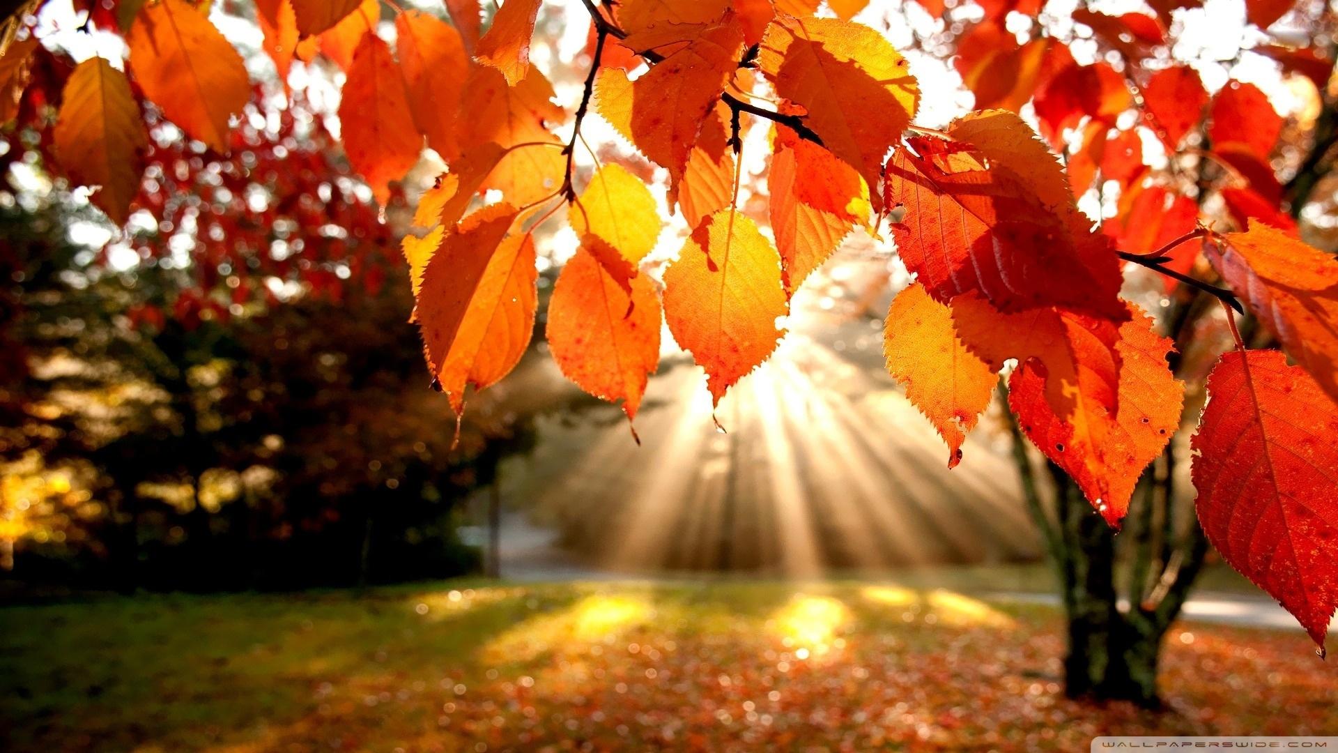 autumn landscape ❤ 4k hd desktop wallpaper for 4k ultra hd tv