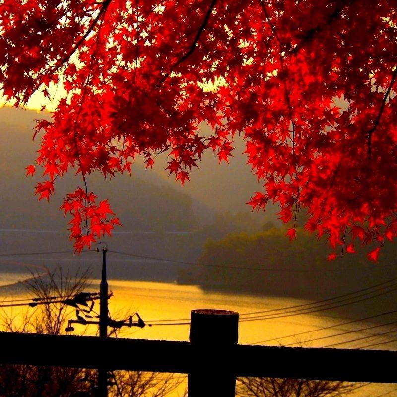 10 Latest Autumn Landscape Wallpaper Hd FULL HD 1920×1080 For PC Desktop 2018 free download autumn landscape wallpapers wallpaper cave 800x800