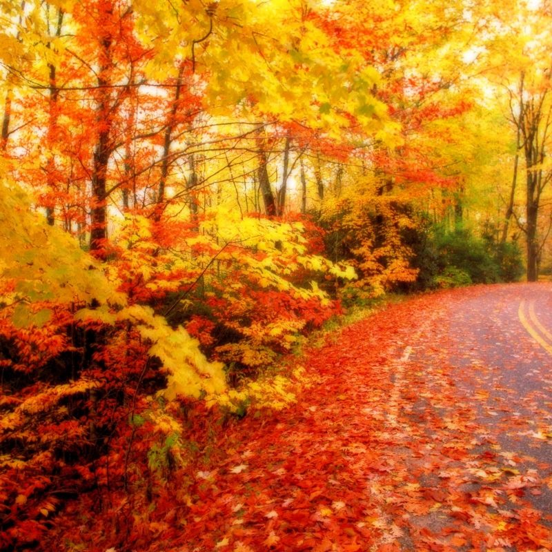 10 New Fall Leaves Desktop Backgrounds Full Hd 1080p For Pc
