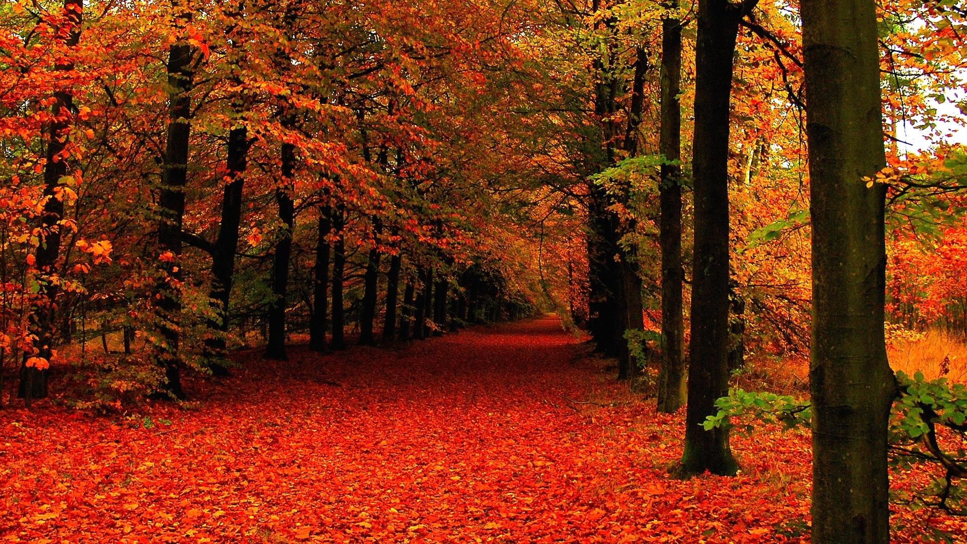 autumn mountain pics 08241 - baltana