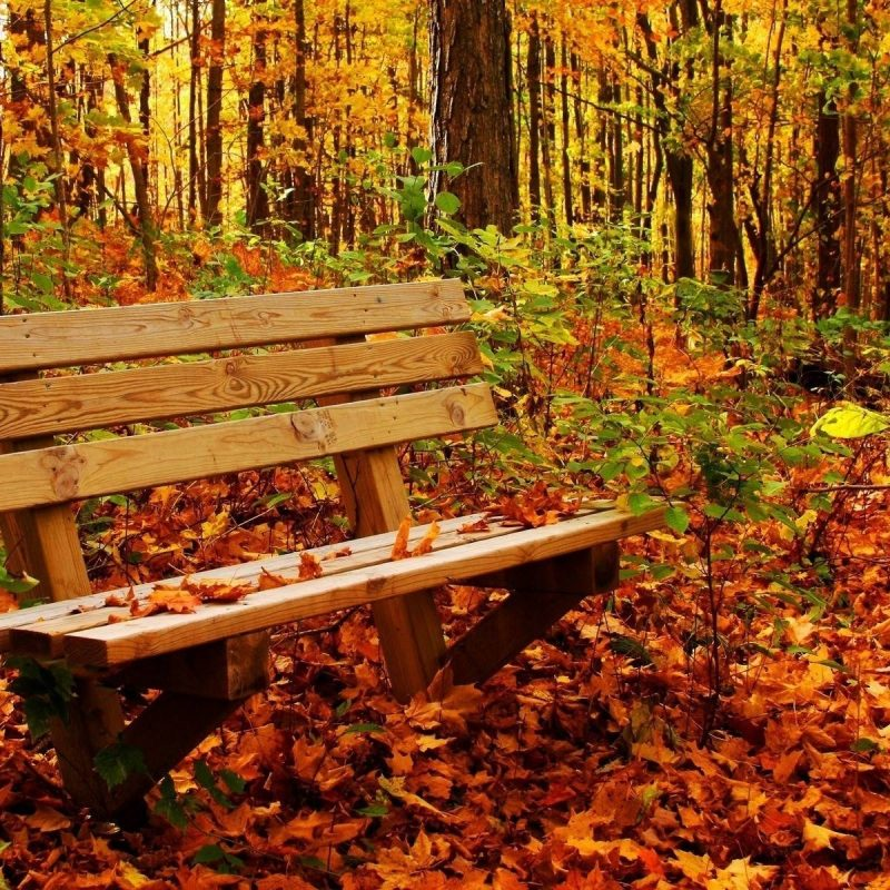 10 Latest Computer Wallpaper Nature Fall FULL HD 1920×1080 For PC Background 2018 free download autumn nature wallpaper desktop hd cool 7 hd wallpaperscom nature 800x800