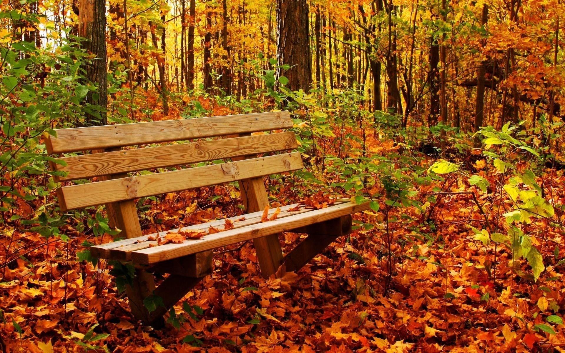 autumn nature wallpaper desktop hd cool 7 hd wallpaperscom | nature