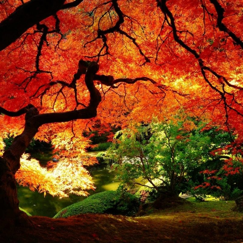10 Best Free Fall Screensavers For Desktop FULL HD 1080p For PC Background 2021 free download autumn pictures for desktop backgrounds c2b7e291a0 800x800