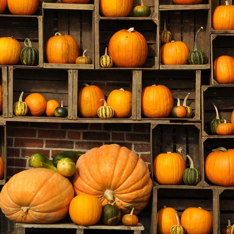 10 New Autumn Pumpkin Desktop Wallpaper FULL HD 1920×1080 For PC Background 2018 free download autumn pumpkin hd desktop wallpaper instagram photo background 800x800