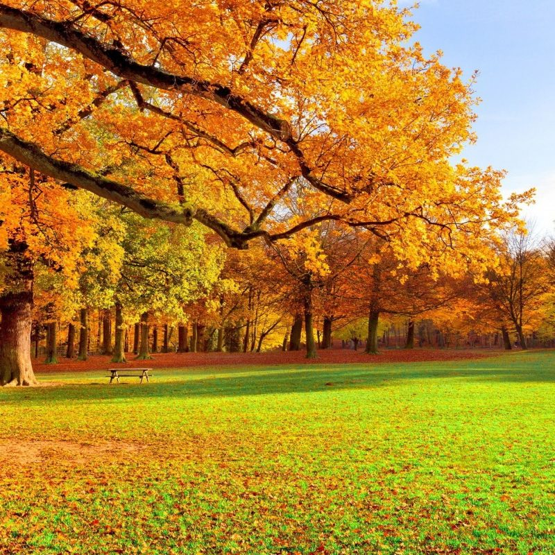 10 Best Autumn Scenery Wallpaper Hd FULL HD 1920×1080 For PC Desktop 2021 free download autumn scenery wallpaper hd picture gallery imagefiesta 800x800