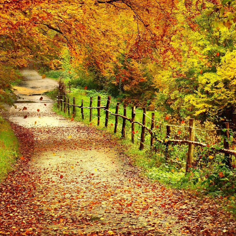 10 Latest Fall Scenes For Desktop Background FULL HD 1080p For PC Desktop 2021 free download autumn scenes desktop wallpaper 2 800x800