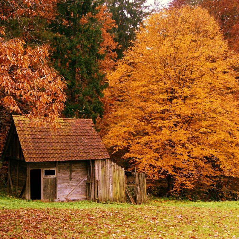 10 Top Autumn Scenes Desktop Wallpaper FULL HD 1920×1080 For PC Background 2018 free download autumn scenes desktop wallpaper 800x800