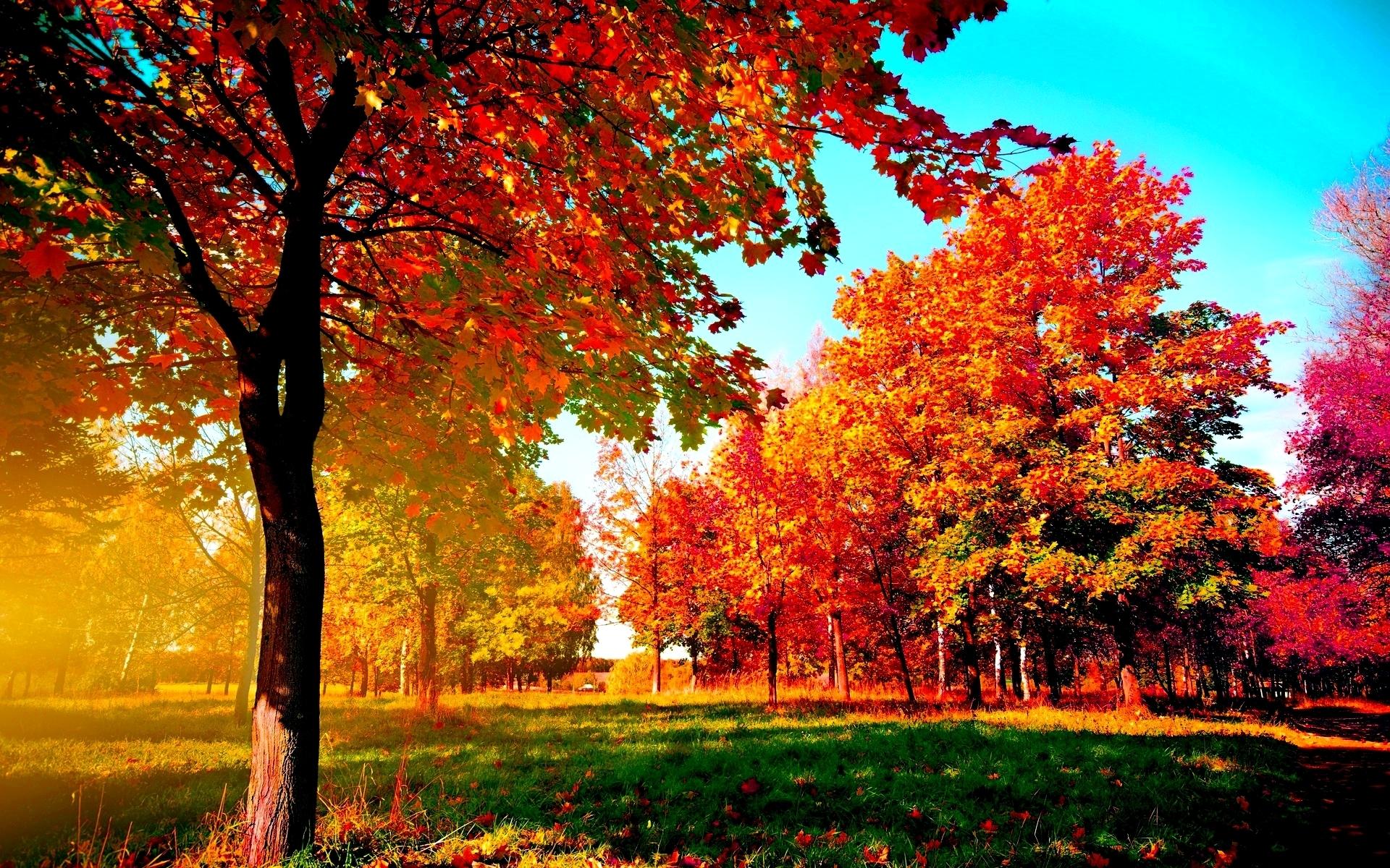 autumn-trees wide desktop background - media file | pixelstalk