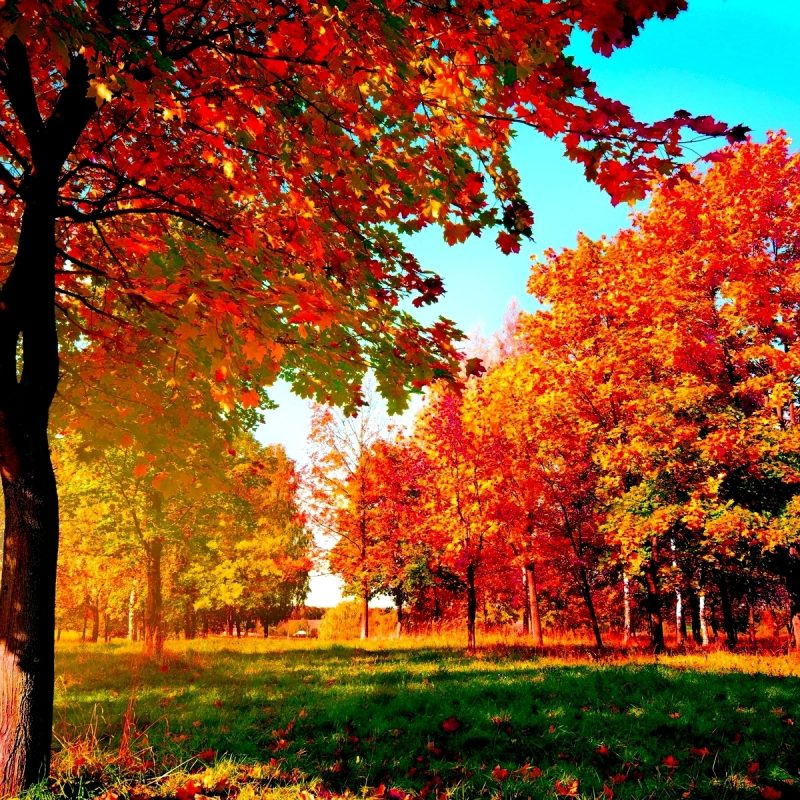 10 Best Fall Wallpapers For Desktop FULL HD 1080p For PC Background 2021 free download autumn trees wide desktop background wallpaper wiki 1 800x800