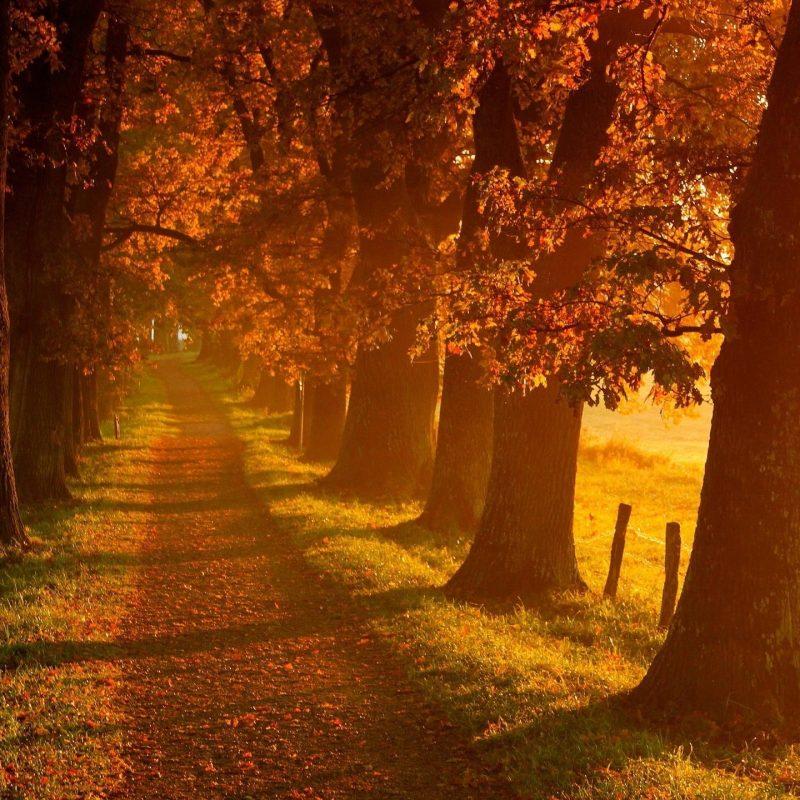 10 Latest Autumn Landscape Wallpaper Hd FULL HD 1920×1080 For PC Desktop 2018 free download autumn wallpaper hd 2017 3 media file pixelstalk 800x800